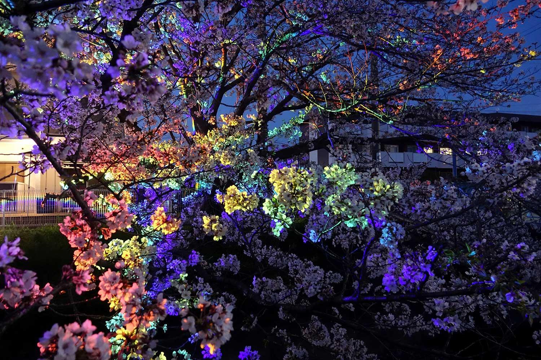 For Lighting Up Plants